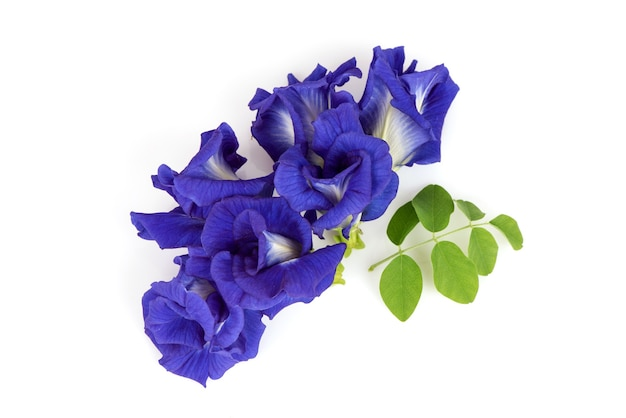 Butterfly pea flowers isolated.top view,flat lay.