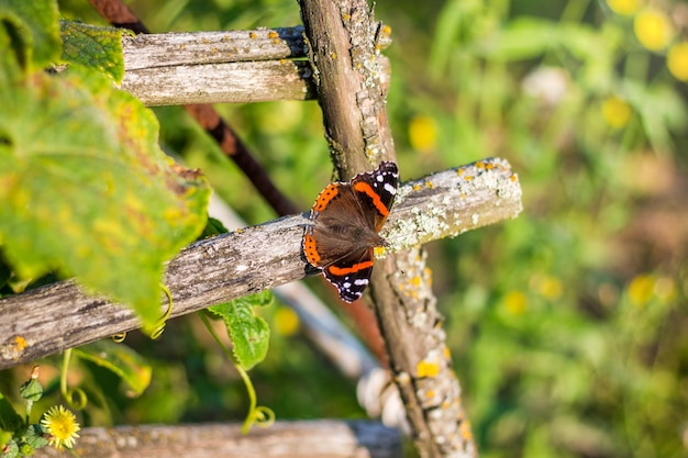 Бабочка павлиний глаз сидит на сухой ветке дерева