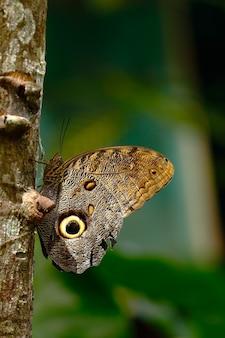 Бабочка сидела на ветке
