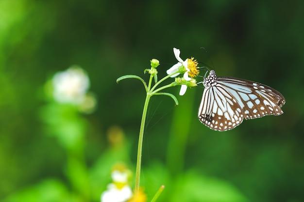 Бабочка сидит на пуговицах пальто цветы или цветы мексиканской ромашки цветут