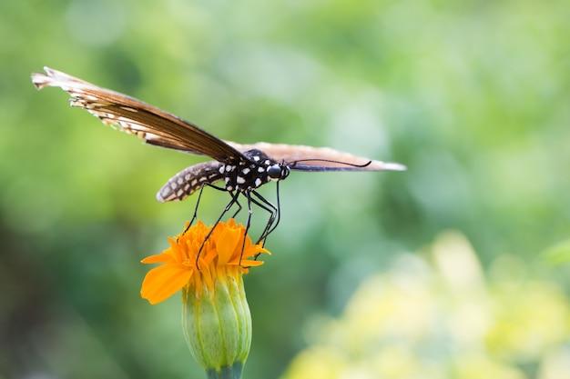 蝶は花の上に座っている