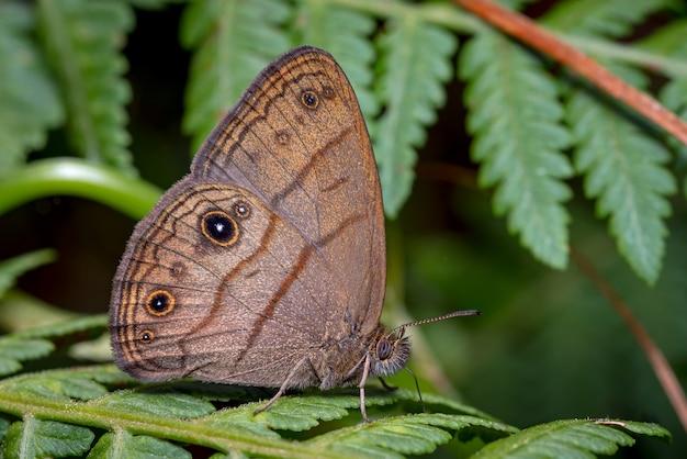 Бабочка тихонько села на папоротник
