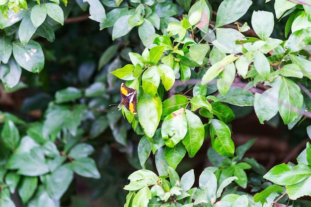 Бабочка сидит на листьях дерева