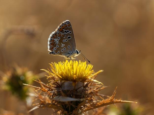 自然環境で撮影された蝶。