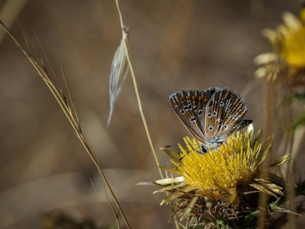 Бабочка сфотографирована в естественной среде обитания.