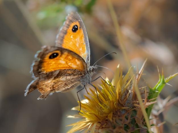 자연 환경에서 촬영한 나비