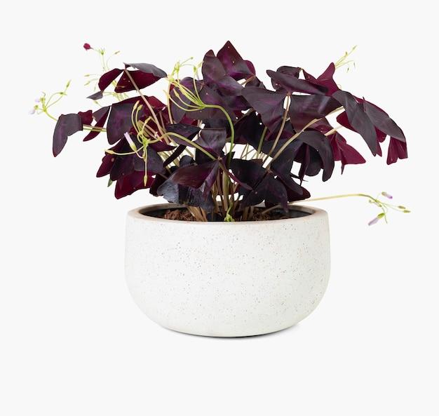 白い鍋に蝶の植物