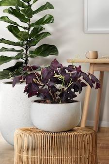 등나무 의자에 나비 식물
