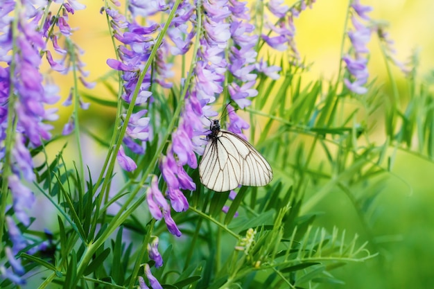 Butterfly polinated violet purple wild flowers on green blurred