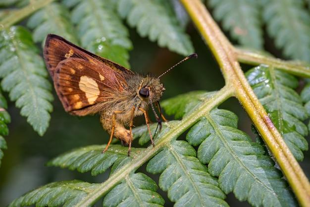 Бабочка отдыхает на папоротнике, принимая солнечные лучи