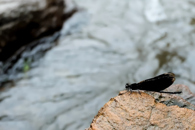 Butterfly on the rocks and the waterfall. represents the integrity of nature.