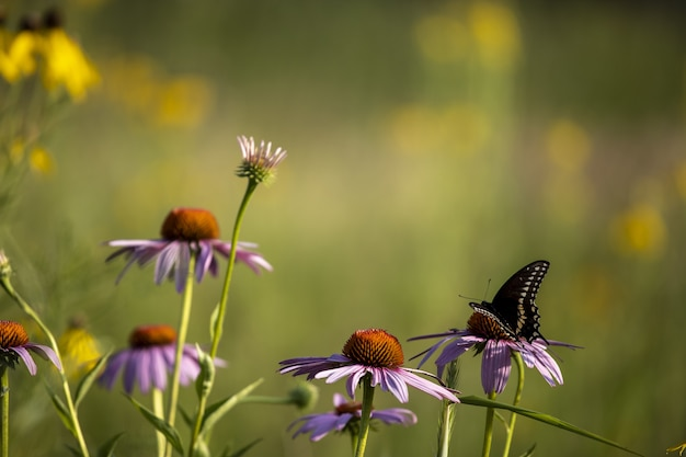Butterfly siting on a vibrant flower