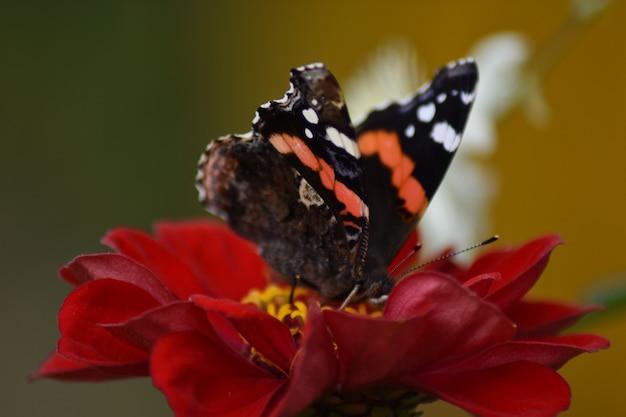 蝶は庭の花の上に座っています