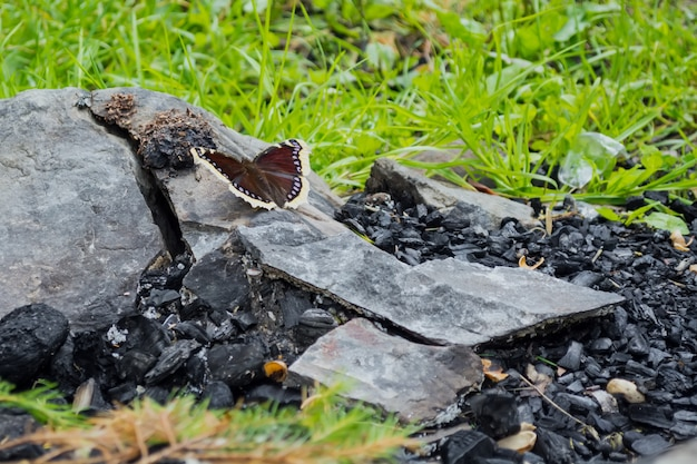The butterfly sits on a stone, near the coals, against the background of the fire.
