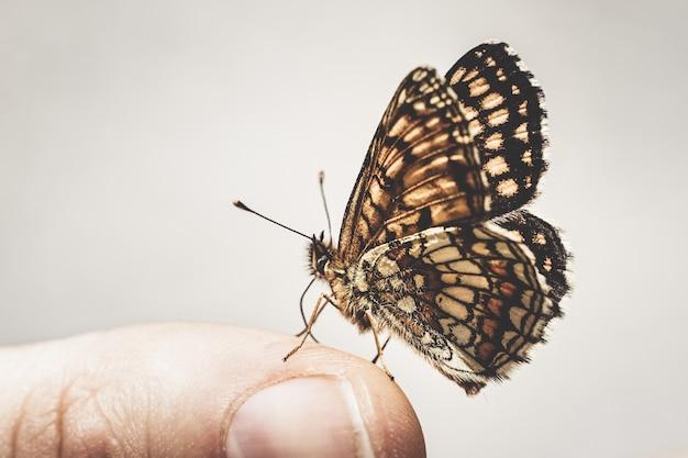 手指先ノズルスキンに座っている蝶