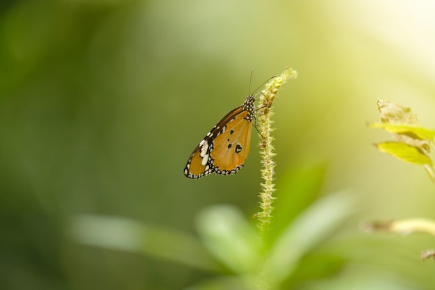Butterfly and soft sunshine.