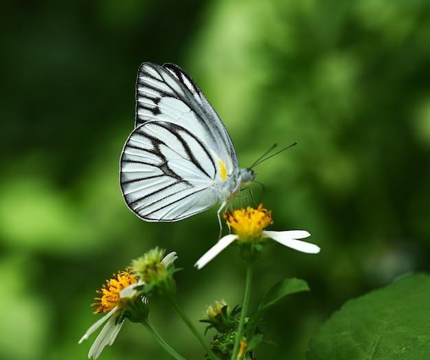 정원에서 꽃에 나비 화이트와 블랙
