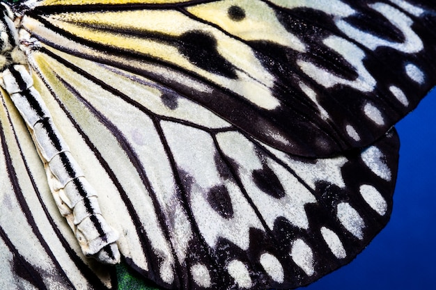 蝶の羽のテクスチャ、背景の蝶の羽の細部のクローズアップ。