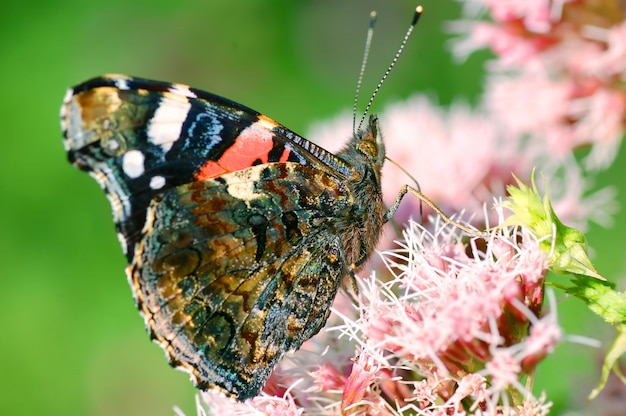 Butterfly with antennae raised