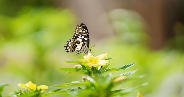 Бабочка с цветком и солнцем