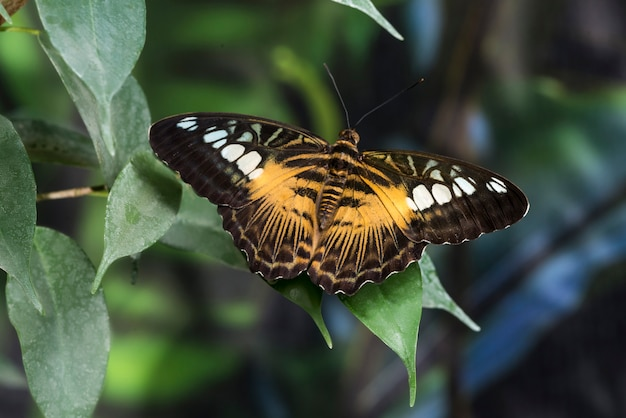 Butterfly with opened wings on leaf