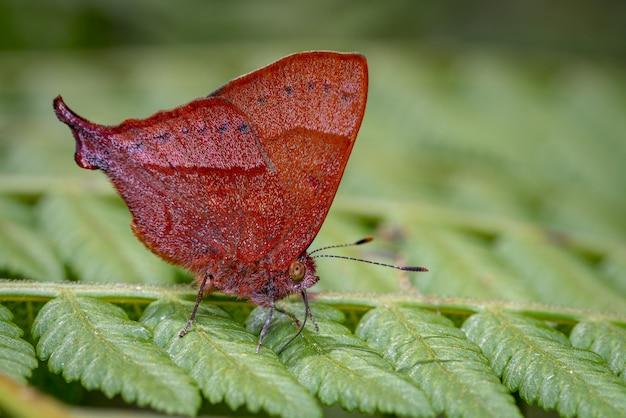 Бабочка с фалангой ищет пищу среди папоротника