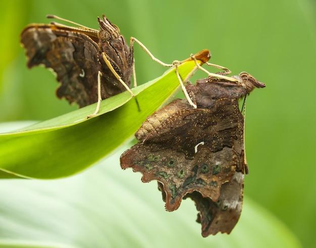 나비 무료 사진