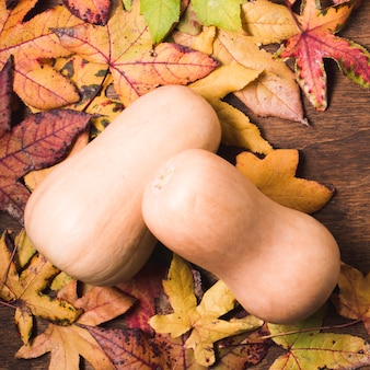 Butternut squash on autumn leaves background