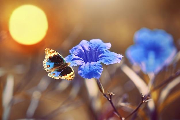 Бабочки на цветке в тропическом саду