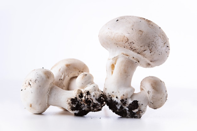 Button mushrooms growing with soil, presented on white background