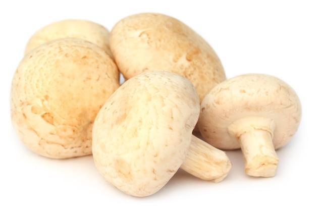 Кнопка грибы на белом фоне