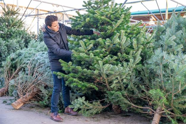 クリスマスツリーを購入し、クリスマス休暇の準備をします。