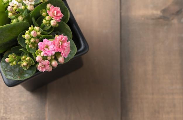 小さなポットと古い木の背景、トップビューとcで美しいピンクのカランコイや炎の光るkatyの花