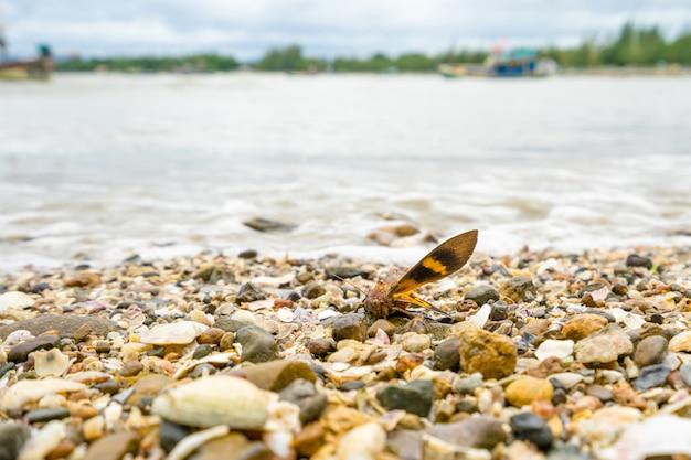 浜辺のcの遺跡