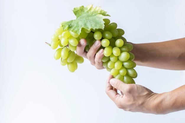 緑のブドウの収穫原料高ビタミンcを手に