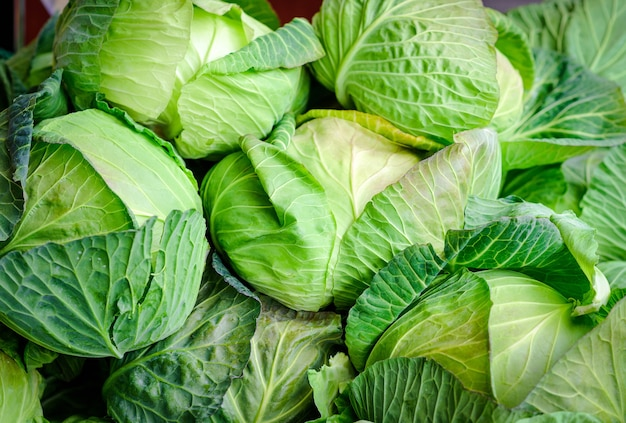Cabbage background, close up macro of fresh cabbage from farm field