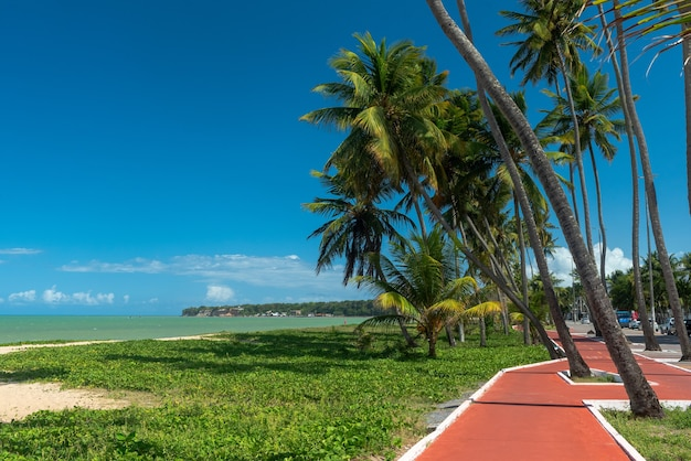 2019년 1월 30일 브라질 joao pessoa paraiba의 cabo branco 해변