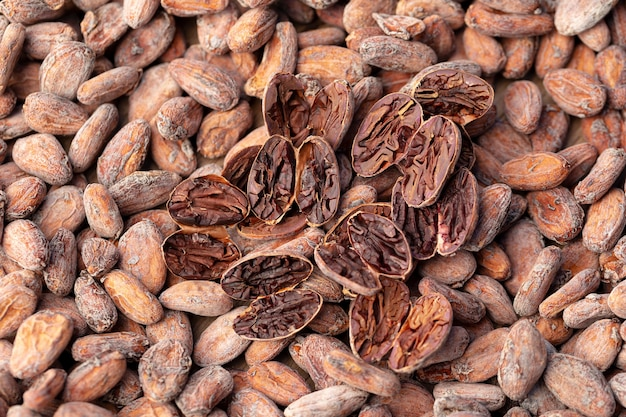Тест на нарезку какао-бобов коричневого цвета. тест на разрез, когда бобы разрезаются вдоль середины, чтобы исследовать внутреннюю часть боба.