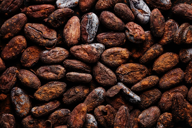 Cacao beans on plate closeup