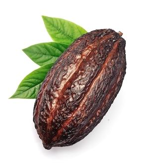 Стручок какао, изолированные на белом фоне
