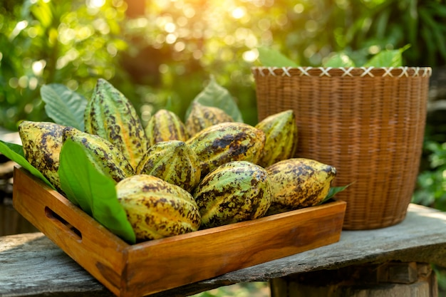 Cacao pods cocoa pods organic chocolate farm, cocoa effect in wooden crates.