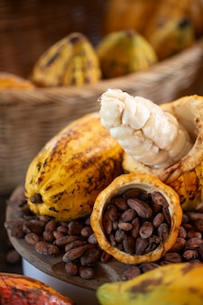 Cacao pods, fermentation, drying, and good storage for making good chocolate, selective focus.