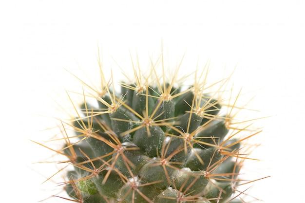 Cactaceae macro