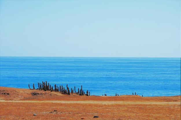 ビーチに近いサボテン