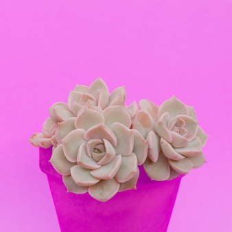 Cacti succulents in a pot. plants on pink fashion concept