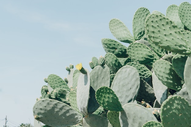 Cacti with a yellow flower
