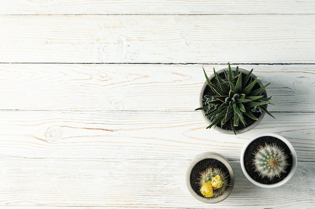 Cacti on wooden surface