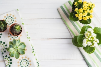 Cactus and potted succulent plant on the white table