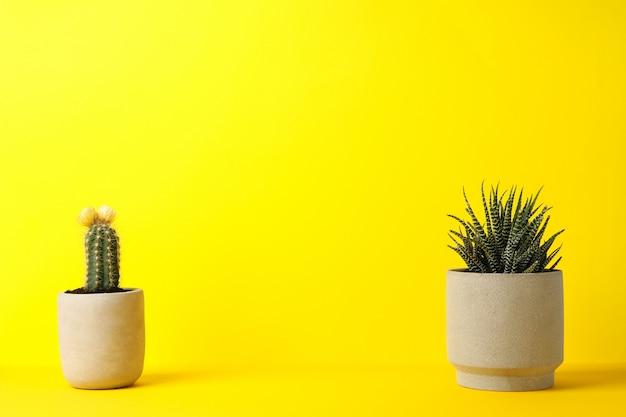 黄色の表面にサボテンと多肉植物