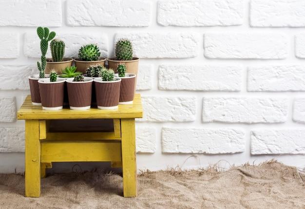 작은 노란색 테이블에 종이 컵에 선인장과 즙이 많은 식물 수집